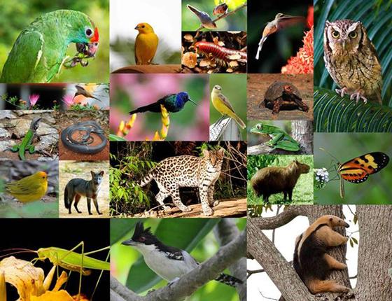 새로 조성된 숲에 돌아온 동물들. [사진 인스티튜트 테라]