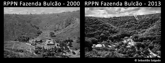 황폐했던 2000년과 자연유산 보호구역으로 지정된 뒤인 2013년 의 숲. [사진 세바스티앙 살가두]