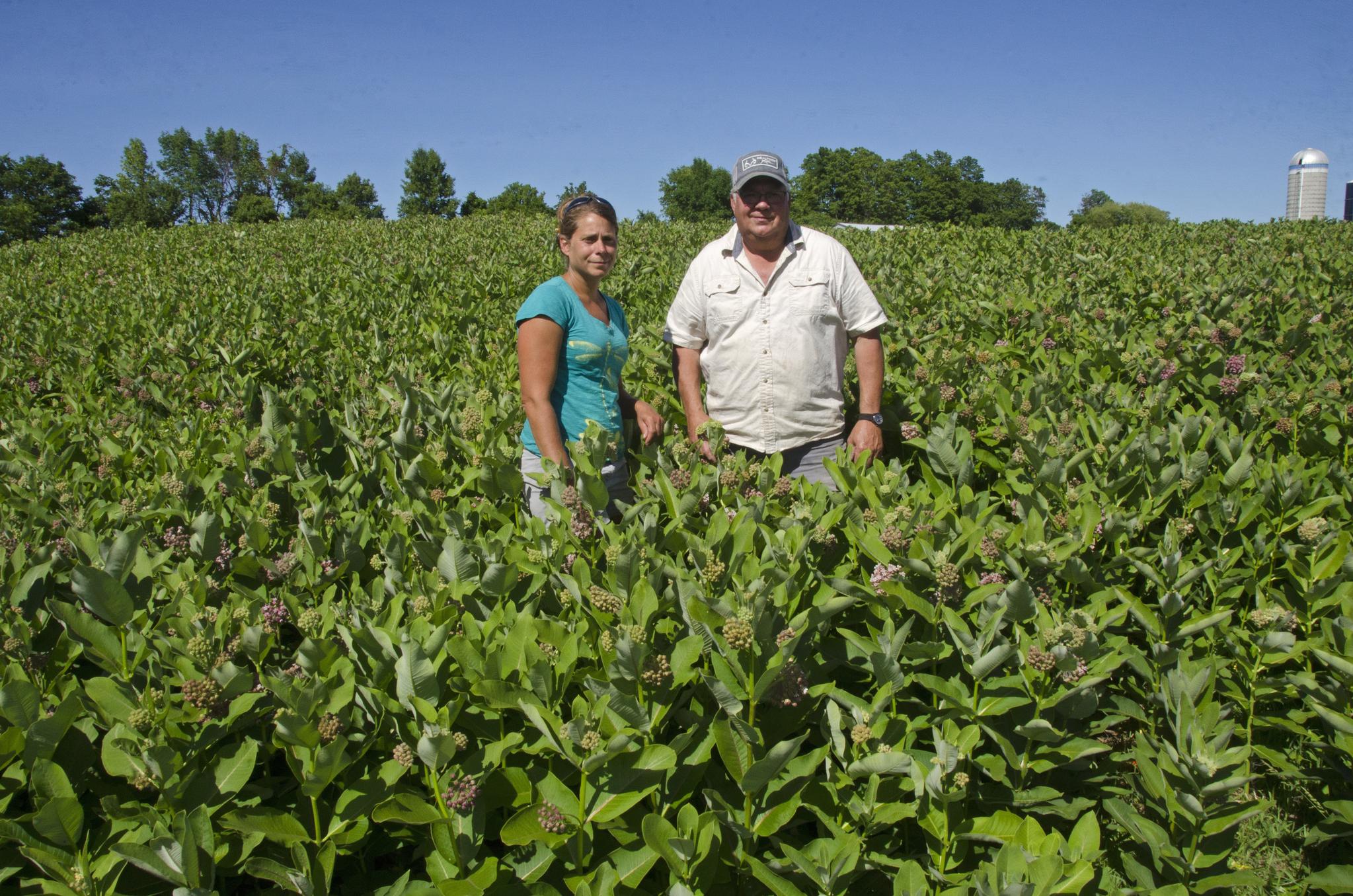 모나크나비를 보호하기 위해 먹이 식물을 기르는 미국 버몬트 주 농민들. [AP=연합뉴스]