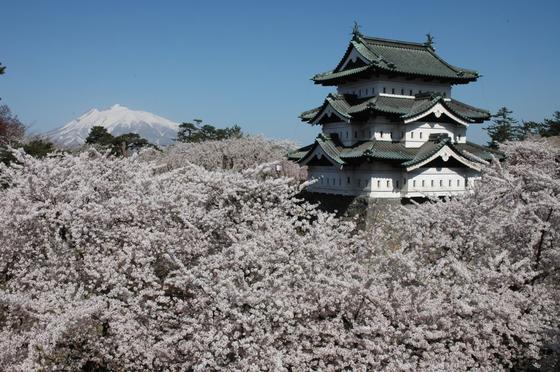히로사키성과 어우러진 벚꽃. [사진 일본정부관광국]