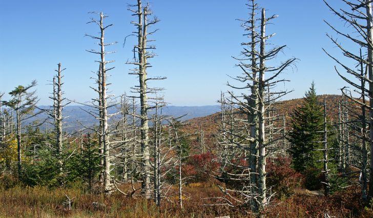 산성비로 인해 훼손된 유럽의 삼림. [중앙포토]