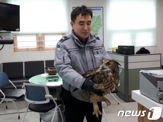 미원파출소로 옮겨진 수리부엉이 [뉴스1]