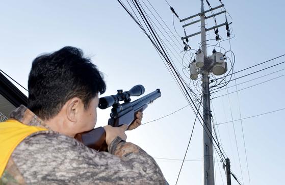 충남 공주시 신관동에 거주하는 김진화(51)씨가 전봇대에 앉아있는 까치를 향해 공기총을 쏘고 있다. 까치 둥지는 정전사고를 일으키는 요인이 된다. 프리랜서 김성태