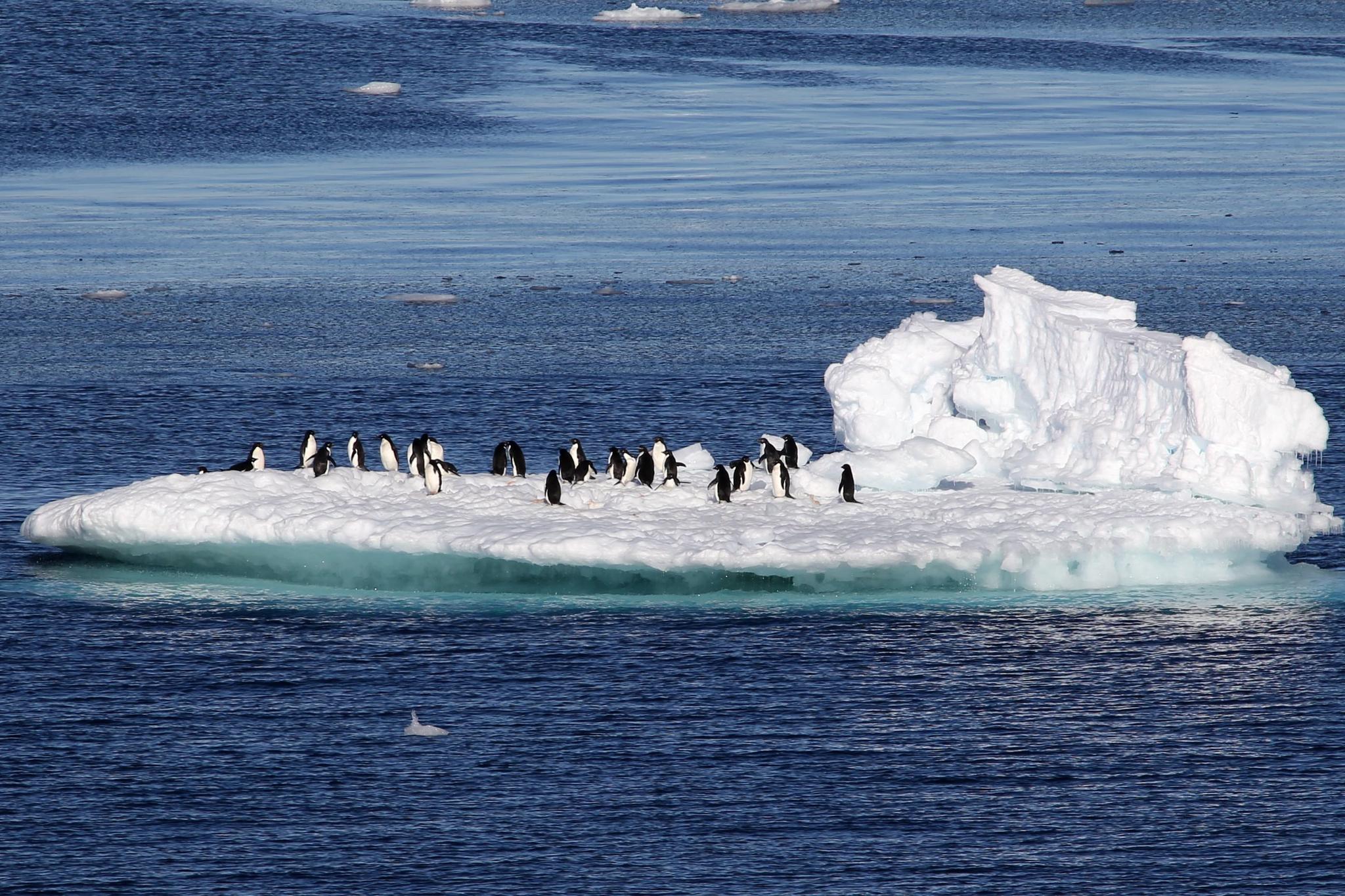 중국 제35차 남극 과학탐사대 쇄빙선 쉐룽(雪龍)호가 19일 신화통신을 통해 공개한 남극의 펭귄들.[신화=연합뉴스]