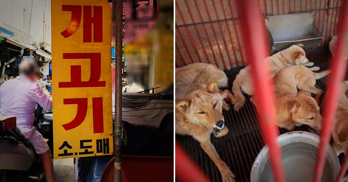 서울 동대문구는 구내 남은 경동시장 개 업소 2곳이 지난해 연말 부로 개 도축을 중단했다고 18일 밝혔다. [중앙포토, 연합뉴스]
