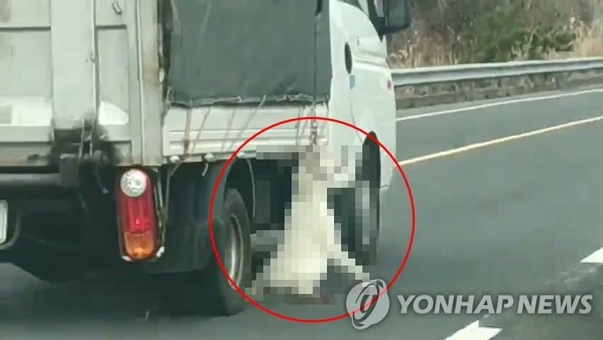 차에 개 매달고 달린 트럭 운전자. [독자 제공=연합뉴스]