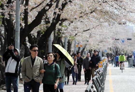 완연한 봄날씨를 보인 지난해 4월 12일 오전 서울 영등포구 여의서로에서 시민들이 흩날리는 벚꽃길을 걸으며 산책을 즐기고 있다. [뉴스1]
