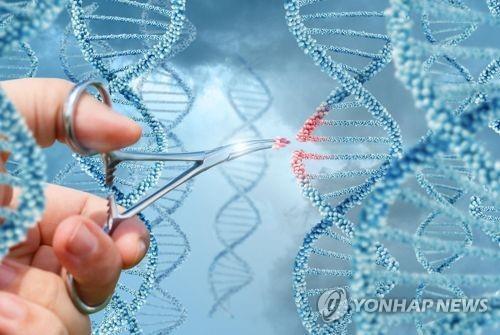 미국 로스앤젤레스 캘리포니아대 연구진이 CCR5 유전자를 편집할 경우 지능이 높아질 수 있다는 내용의 연구결과를 발표했다. [사진 연합뉴스]