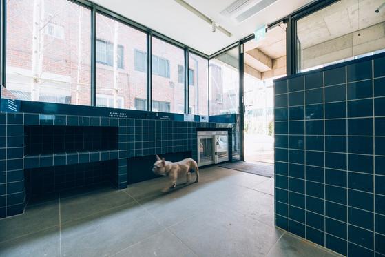 '애완동물 대환영'이라는 트리하우스. 애완동물을 씻길 수 있는 공간도 갖췄다.[사진 이지응 작가]