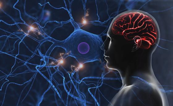 뇌연구원 코소도 요이치 박사 연구진이 인간 유도만능줄기세포를 물고기 콜라겐으로 만든 환경에 배양해 기존보다 60% 더 많이 생산할 수 있는 기술을 개발했다. [중앙포토]