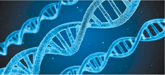 DNA의 모습을 묘사한 이미지. DNA는 일상적으로 여러 요인에 의해 손상을 입는다. 뉴런은 많은 ATP를 소비하기 때문에 활성산소에 취약한데, 이 때문에 DSBs가 발생하기도 한다. 수면은 이런 DSBs 회복을 돕는다. [사진 pixabay]