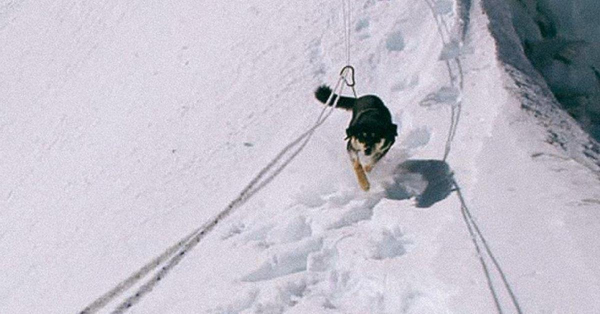 '개 최초'로 7000m급 고봉 정복에 성공한 개 메라. 메라가 로프를 이용해 산을 오르고 있다. [사진 아웃사이드]