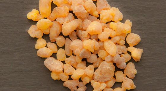 보스웰리아(boswellia). 인도와 중동 사막 지역의 보스웰리아 나무의 진액. [사진 pxhere]