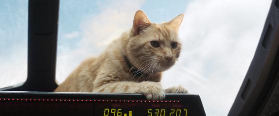 고양이 '구스'. 흥행에 일조한 신 스틸러다.