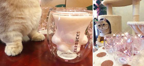 반려묘를 키우는 네티즌이 웨이보에 올린 '고양이컵'인증 사진 [사진 웨이보]