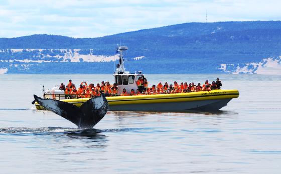 고무보트 '조디악'호를 타고 고래 관광을 즐기는 사람들. [사진 캐나다관광청]