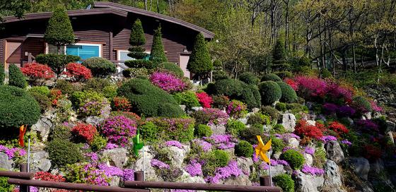 철쭉꽃과 꽃잔디로 화려하게 조경을 한 방장산자연휴양림. [사진 국립자연휴양림관리소]