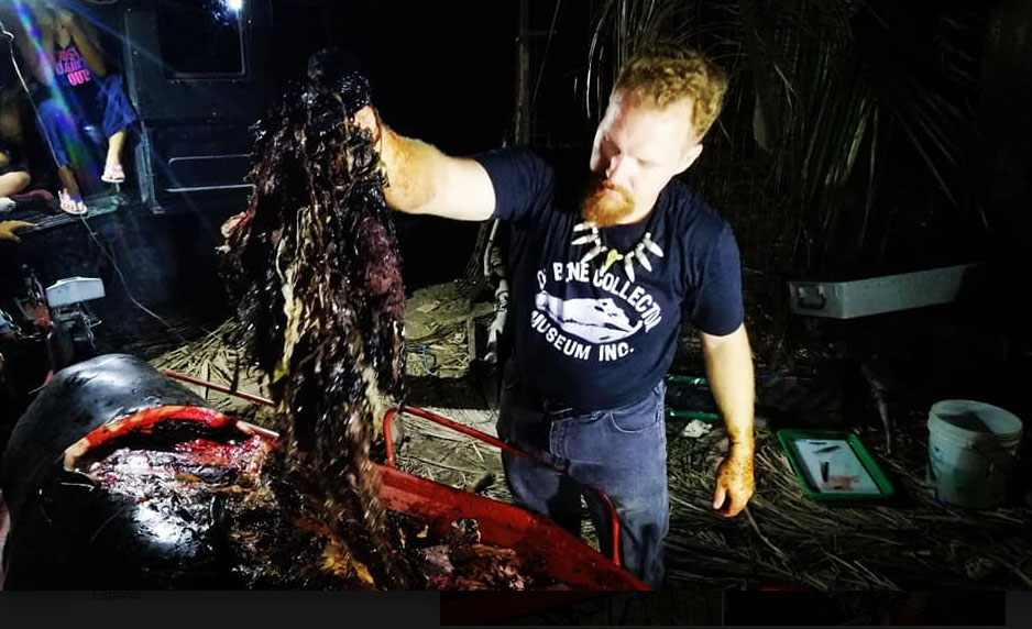 지난 15일 필리핀 해안에서 숨진 채 발견된 고래 뱃속에서 플라스틱 쓰레기가 40㎏이나 나왔다. 사진은 이 고래를 해부한 해양생물학자 대럴 블래츌리 박사가 쓰레기를 꺼내는 모습. [사진 D' Bone Collector Museum Inc. 페이스북]