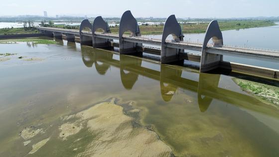 지난해 7월 연일 이어진 폭염에 광주 남구 영산강 승촌보에서는 수문을 개방했는데도 녹조가 발생했다. [연합뉴스]