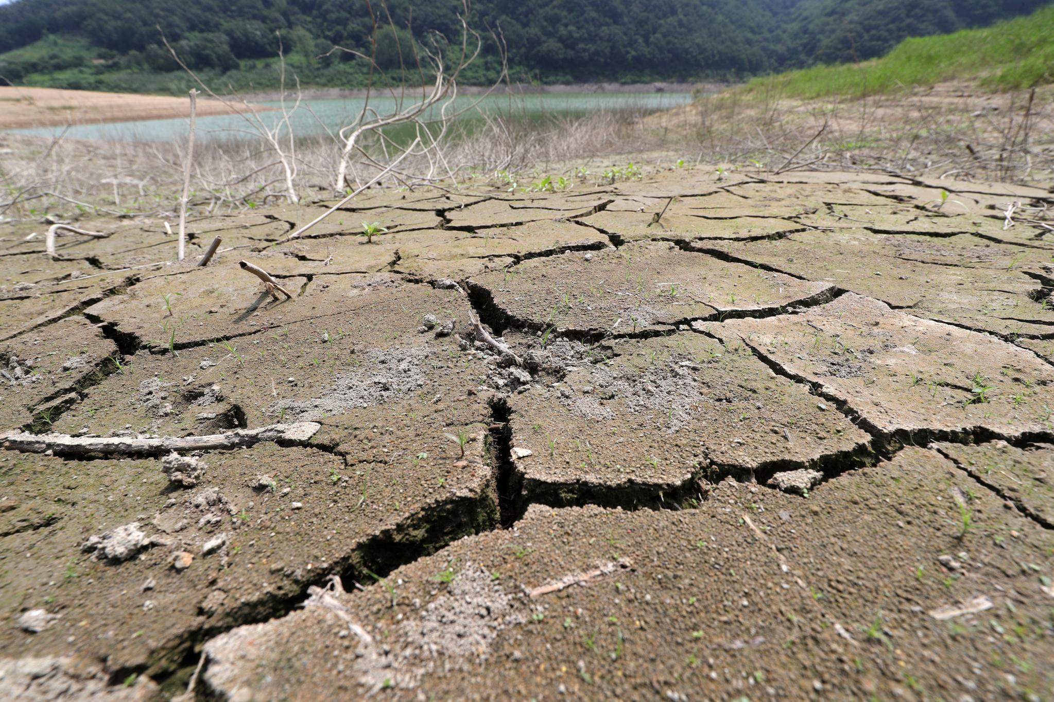 지난해 8월 유례없는 폭염과 가뭄으로 전북 임실군 운암면 옥정호의 물이 말라가며 바닥이 쩍쩍 갈라졌다. [뉴스1]