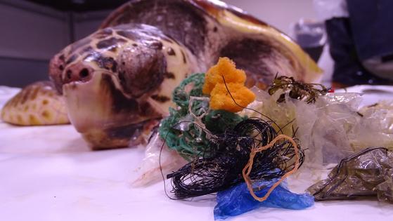 남부 연안에서 발견된 붉은바다거북 사체와 뱃속에서 발견된 각종 플라스틱 쓰레기. [국립생태원 제공]
