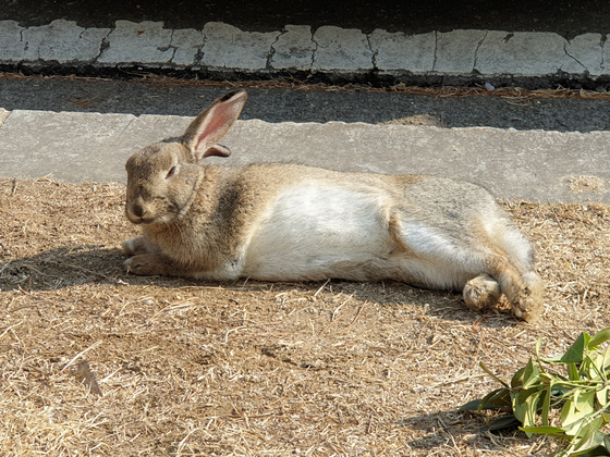 대검찰청 잔디밭에 토끼 한마리가 누워 휴식을 취하고 있다. 김기정 기자