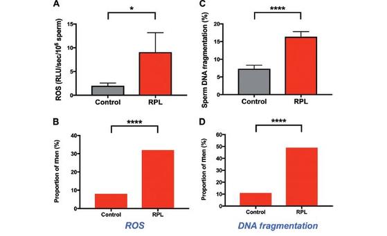 측정결과 대조군에 비해 RPL을 경험한 남성의 경우 활성산소(ROS)는 4배(A), DNA 손상은 2배(C)로 나타났다. [그래픽제공=임상화학(Clinical Chemistry)지]
