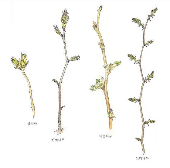 [소년중앙] 황경택 쌤과 자연이랑 놀자 13.나무의 생일
