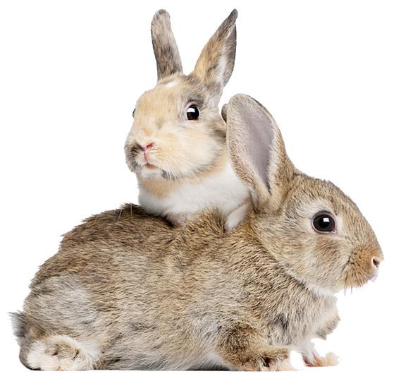 토끼는 예민하고 겁이 많으나 화장실을 가리고 스스로 몸단장을 하는 깨끗한 동물이다. [중앙포토]