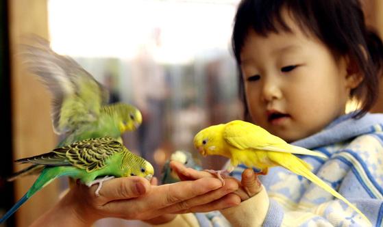 앵무새는 영리하며 사회성이 많고 놀기를 좋아해 장난감을 많이 넣어주고 보호자가 자주 접촉을 해주어야 한다. 사진은 가족과 함께 동물원을 찾은 한 아이가 앵무새에게 먹이를 주며 즐거워하고 있는 모습. [중앙포토]