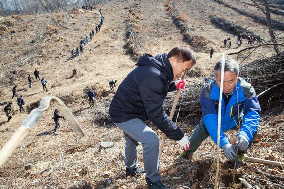 3일 춘천시 동산면 원창리 일대에서 나무심기 행사가 열려 참가자들이 자작나무 등 6천800그루를 심고 있다. [연합뉴스]