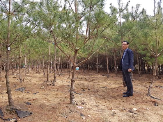 신경수 보은군 산림경영팀장이 지난 1일 군 내 양묘장에서 정이품송 후계목을 소개하고 있다. [최종권 기자]