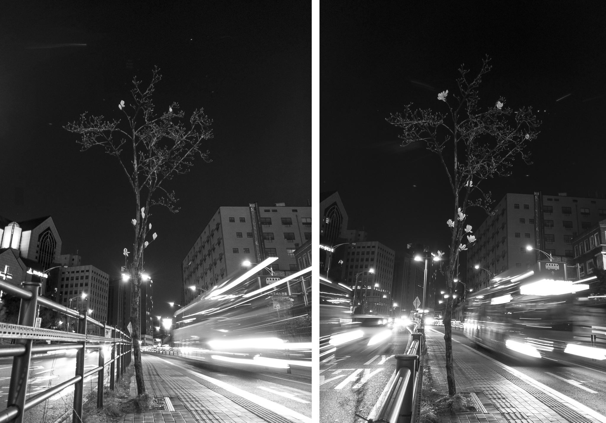 왼쪽 3월 31일 촬영                      오른쪽 4월 5일 촬영