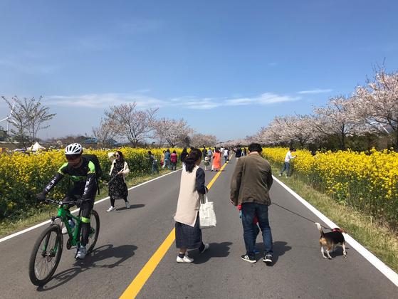 지난 5일 10㎞의 벚꽃과 유채꽃길이 펼쳐진 제주도 서귀포시 표선면 가시리 녹산로 일대를 관광객들이 걷고 있다. 최충일 기자