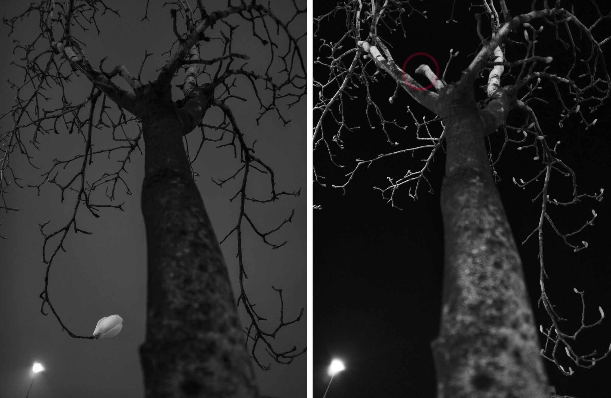 왼쪽 3월27일 촬영                      오른쪽 4월 5일 촬영