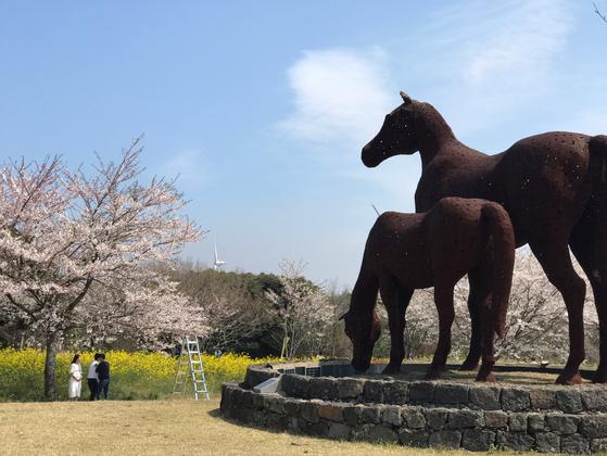 제주유채꽃축제가 열린 녹산로 일대의 대형 말 조형물. 최충일 기자