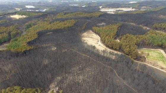 지난 6일 산불로 큰 피해를 본 강원도 속초시 장천마을 일대 산림이 폐허로 남아 있다. [연합뉴스]
