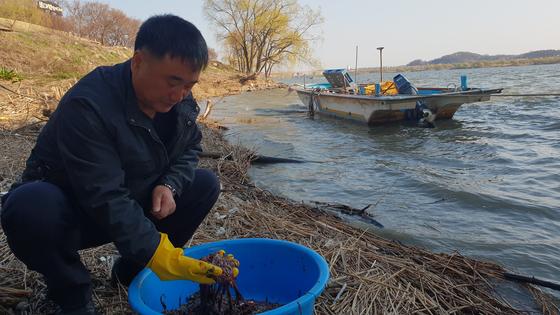 지난 4일 경기도 고양시 행주대교 인근 한강하구에서 잡힌 끈벌레를 어민이 들어보이고 있다. 전익진 기자