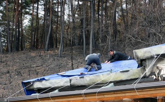 최근 산불이 발생한 강원 동해안에 비가 예보된 9일 강원 강릉시 옥계면에서 주민이 불에 탄 지붕으로 비가 새지 않도록 방수포를 덮고 있다. [연합뉴스]