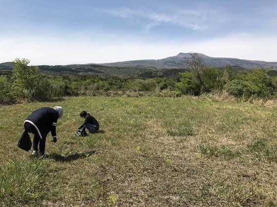 관광객들이 제주도 한라산 저지대에서 고사리를 꺾고 있다. 최충일 기자