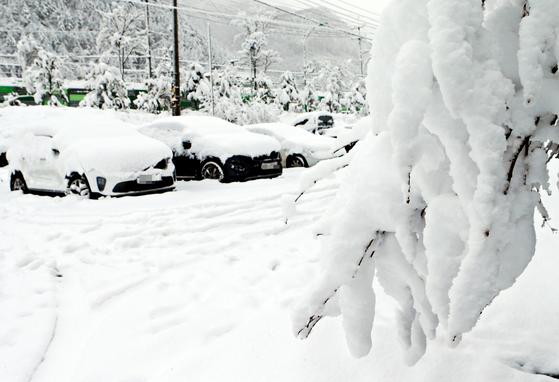 10일 강원 태백시 상장동 주차장의 차들이 눈으로 덮였다.   태백지역에는 이날 오전 7시 현재 22.5㎝의 눈이 내렸다. [연합뉴스]