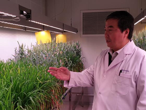 란이둥 제노보 바이오 대표가 곰팡이병에 강한 유전자 교정 밀을 소개하고 있다. [강기헌 기자]