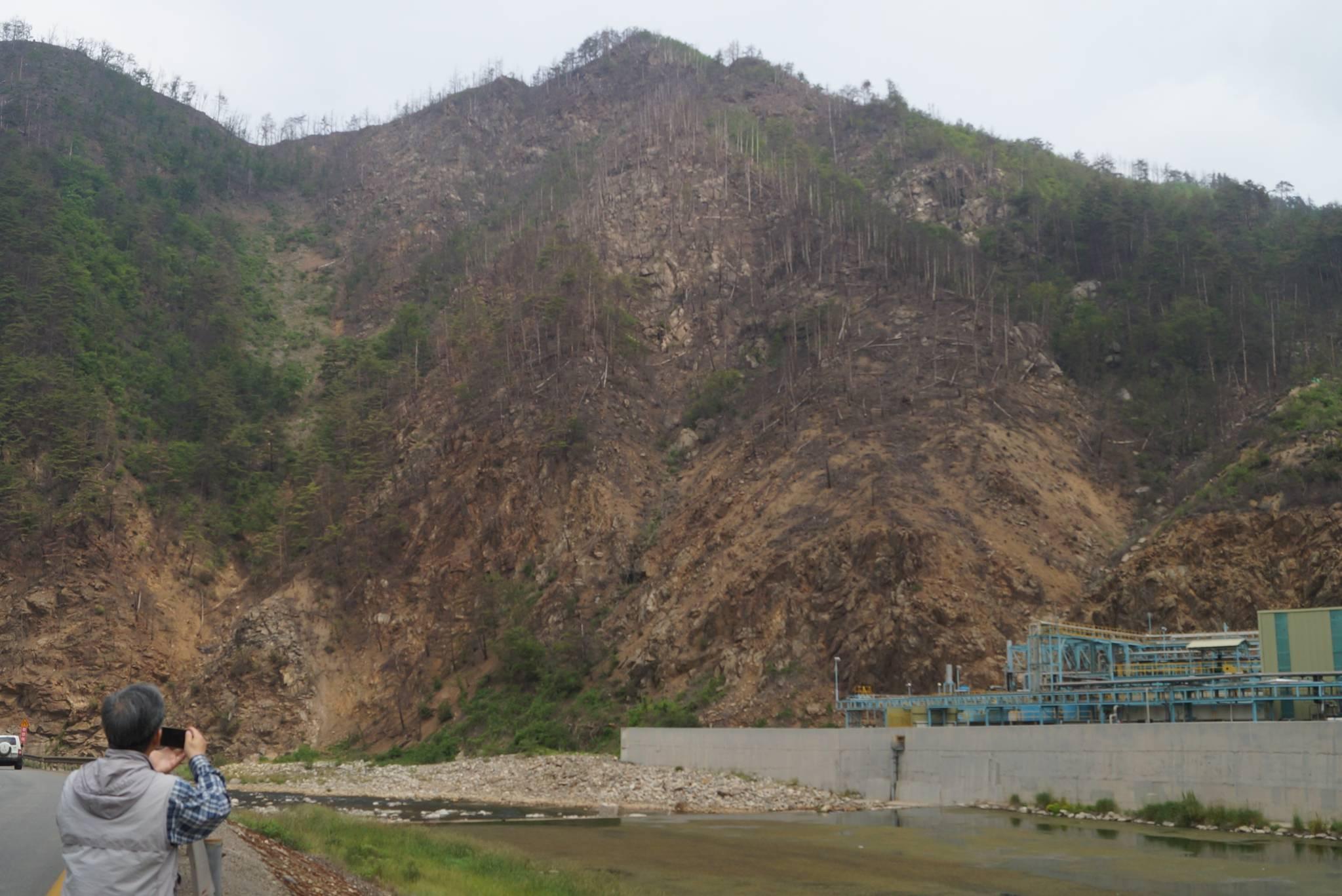석포제련소 주변 산림. 강찬수 기자