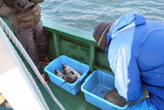 지난 2014년 2월 후쿠시마 제1원전에서 남쪽으로 20㎞ 떨어진 바다에서 그물로 잡은 농어 두 마리가 바구니에 담겨 있다. 후쿠시마현에서 농어는 출하제한 어종이다. [중앙포토]