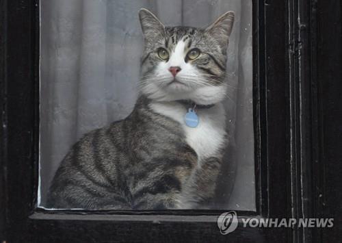 줄리언 어산지의 고양이. [EPA=연합뉴스]