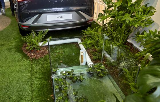 수소전기차 넥쏘는 매연 대신 깨끗한 공기와 물을 배출한다. 배출된 물을 활용해 식물을 키울 수 있다는 걸 보여주고 있다.