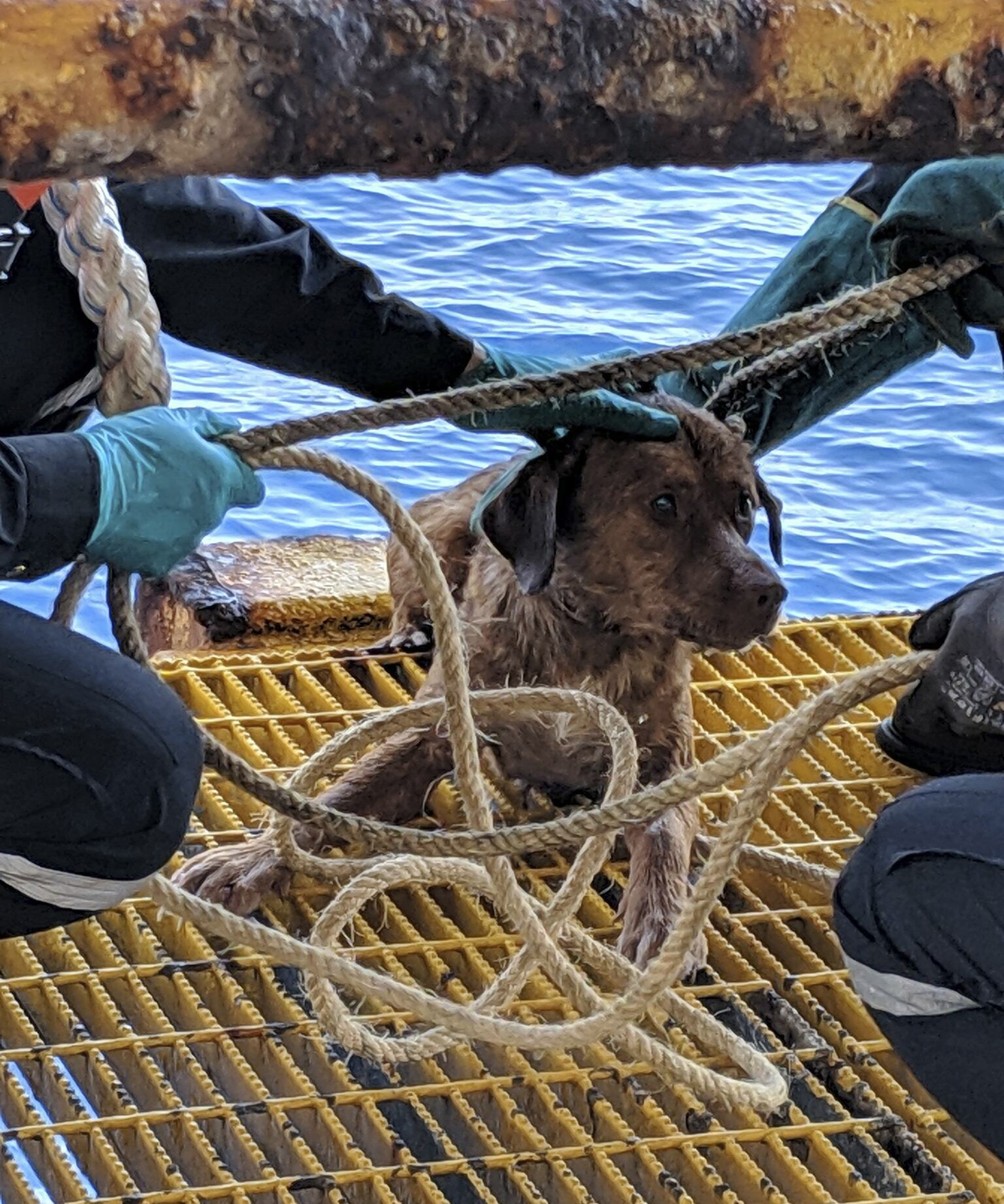 석유 굴착 작업자들은 로프를 분로드에 목에 걸어 끌어올리는 방식으로 이 개를 구조했다. [AP=연합뉴스]