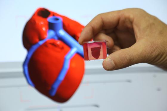 텔아비브대 연구진이 만들어낸 인공 심장은 쥐의 심장과 그 크기가 비슷할 정도로 작지만, 내부에 혈관과 심실 등이 자리하고 있다. 특히 3D 프린팅 기술을 이용해 이같은 성과를 낸 것은 세계 최초다. [사진 신화통신]