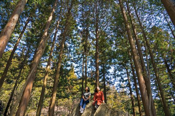 전남 장성 축령산은 봄기운에 빠져들기 좋은 숲이다. 막대한 숲이 편백과 삼나무로 빽빽하다. 키 큰 나무가 겹겹이 진을 치고 있어, 바람도 햇볕도 순한 편이다. 너럭바위와 평상이 숲 곳곳에 있다. 백종현 기자