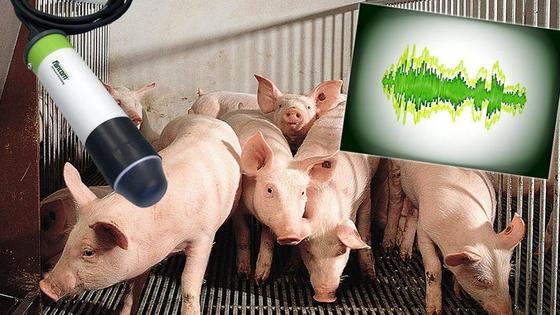 우리에 마이크로폰을 설치한 뒤 돼지 기침을 분석해 질병을 조기에 발견한다. [SoundTalks Fancom]